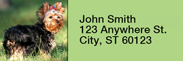 Yorkshire Terriers Rectangle Address Labels | LRRDOG-24